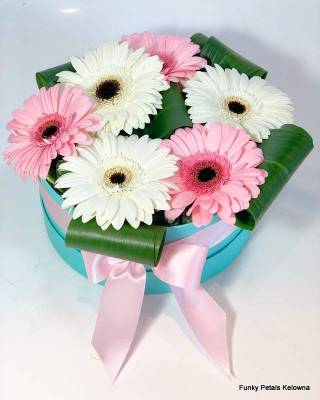 Funky Petals Signature Collection Daisies