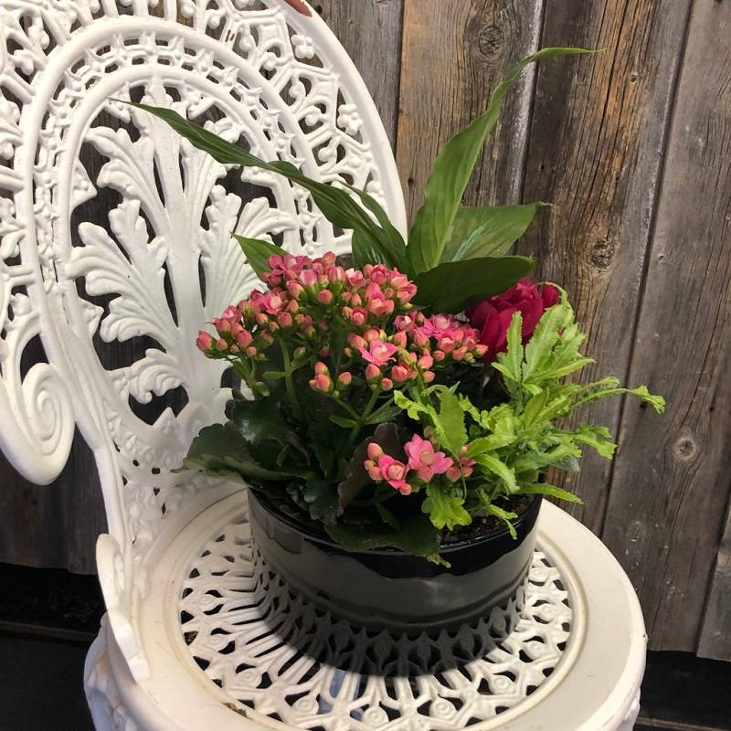 Mix Blooming Planter