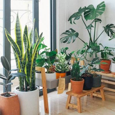 Green House Plants
